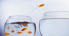 Lead the Pack on Freelance Accountants